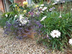 planting DIY raised bed